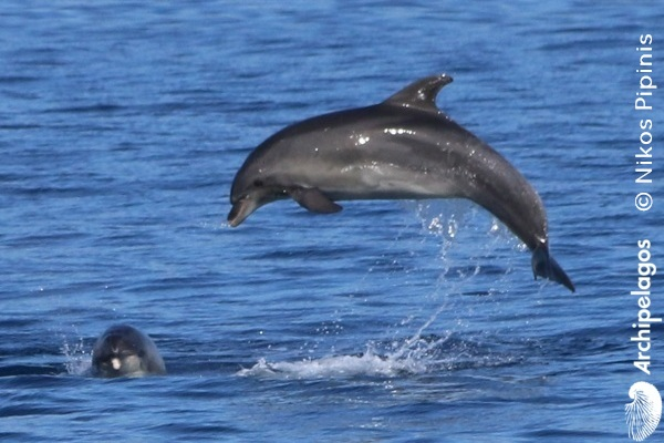 Gallery_CET_10_Tursiops_Nikos_PIPINIS_mommy4_LOWres