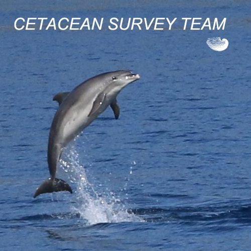 SURVEY TEAM FRONT