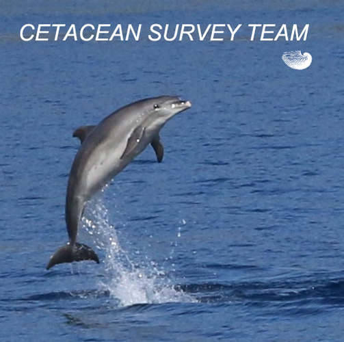 Cetacean Survey Team
