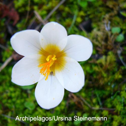Flora rara