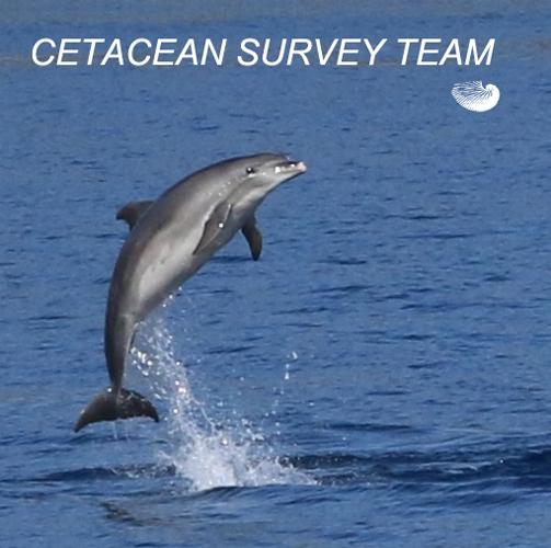 Cetacean Survey Team
